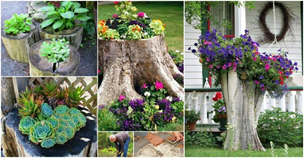 Tree Stump Planter Ideas