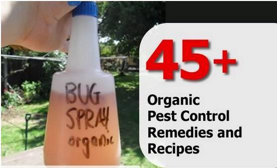 45+ Organic Pest Control Remedies