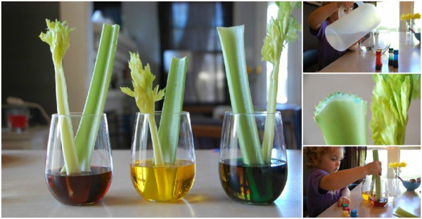 Celery Science Experiment 1