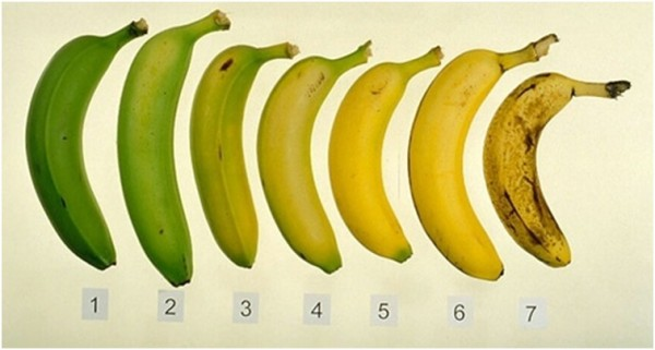Fresh or Ripe Best Time To Eat A Banana