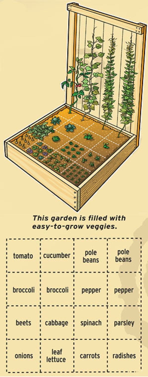 Gardening 101 - How To Start a Vegetable Garden 1