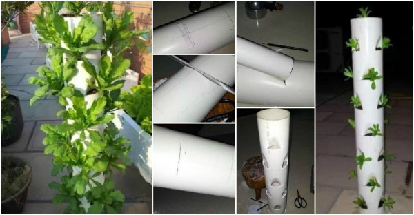 Gardening With PVC Tubes