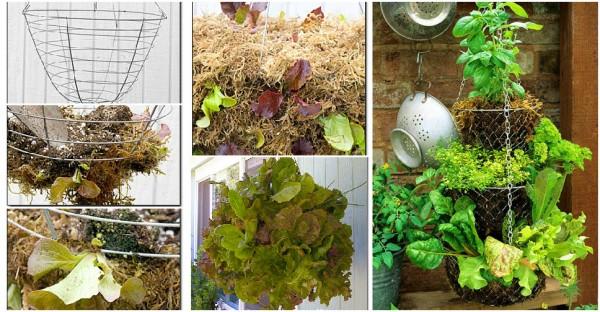 Hanging Basket Herb Garden