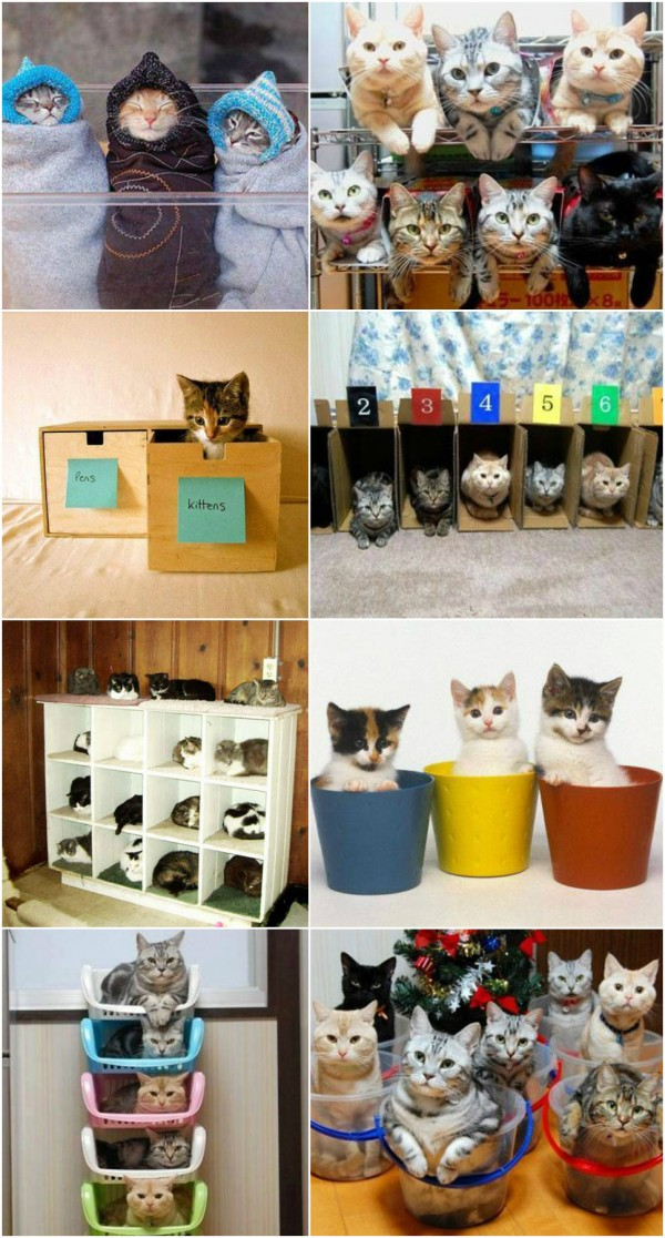 How To Organize Your Cats 1