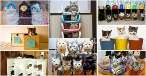 How To Organize Your Cats