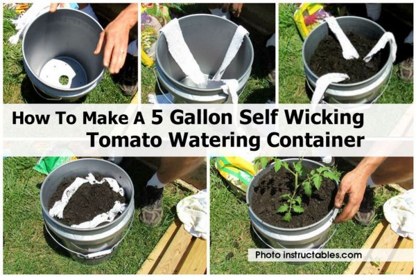 How to Build a Self Wicking Tomato Watering Container