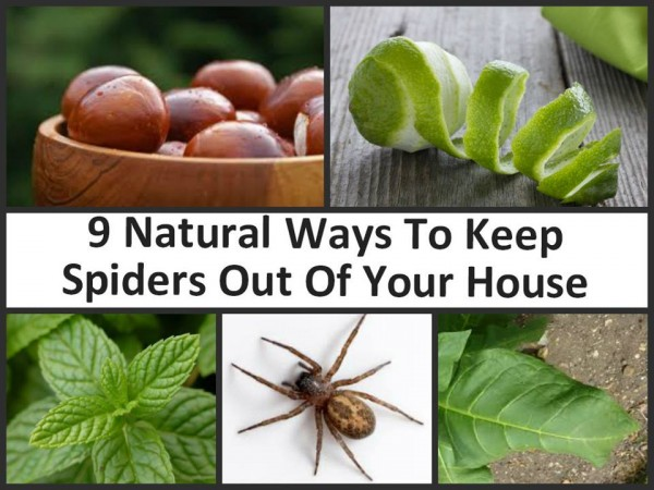 natural ways to keep spiders out of your house how to