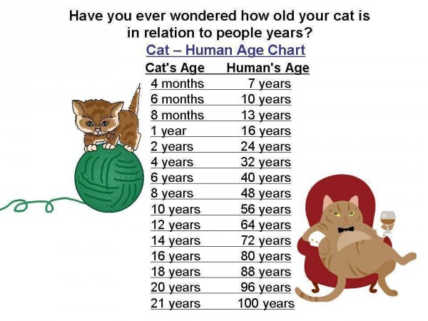 Pet Age Calculator 1