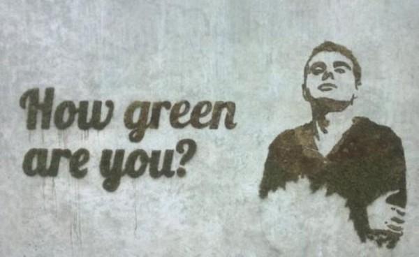 How to grow eco-friendly moss graffiti 13