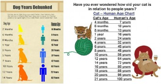 Pet Age Calculator