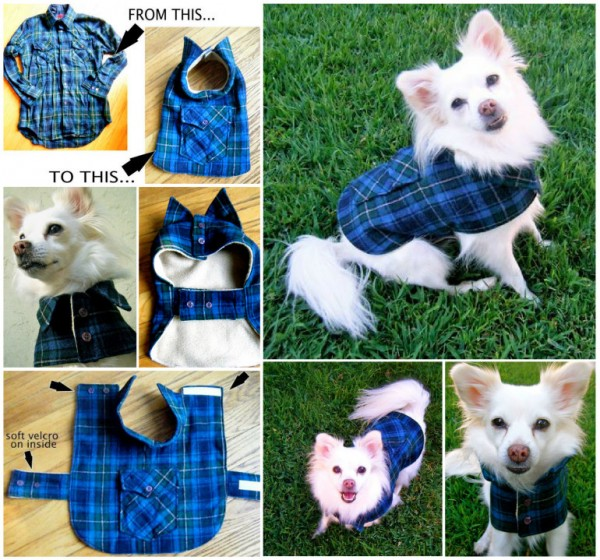 Pet Coat From Recycled Daddy Shirt 1