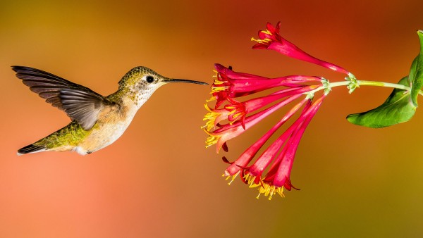 10 Tips To Attract Hummingbirds & Orioles 1