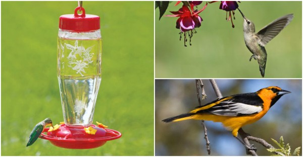 10 Tips To Attract Hummingbirds & Orioles