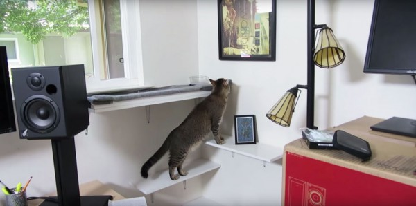 Cat Hunts For Food With This DIY Feeding Machine 1