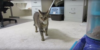 Cat Hunts For Food With This DIY Feeding Machine