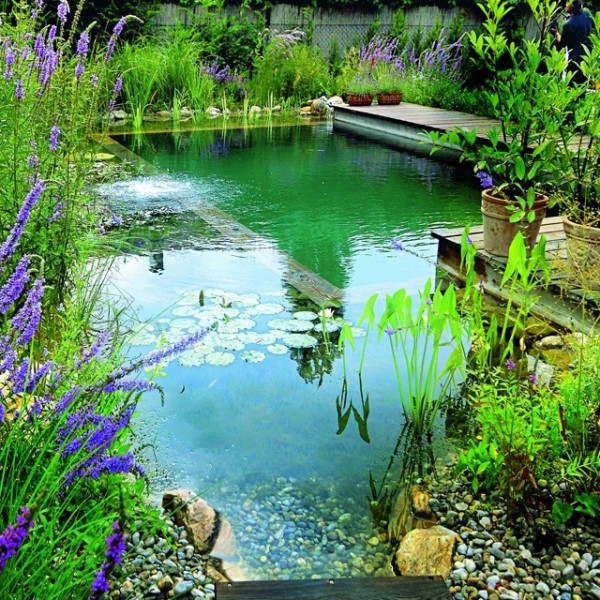 How to build your own natural swimming pool how to instructions for How much is it to build a swimming pool