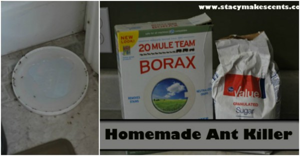 Best Homemade Natural Ant Killer