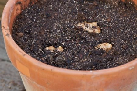 Vegetables That Can Regrow Magically 10