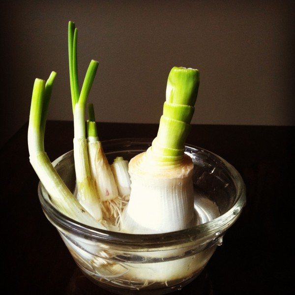 Vegetables That Can Regrow Magically 13