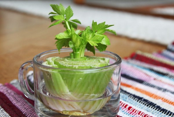 Vegetables That Can Regrow Magically 6