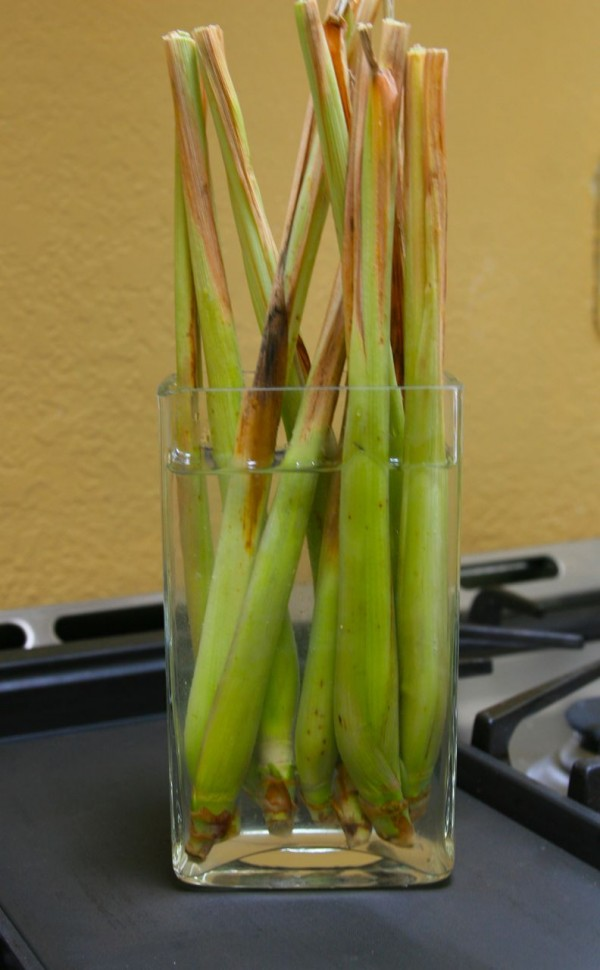 Vegetables That Can Regrow Magically 9
