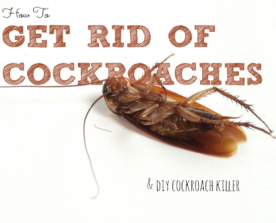 How To Get Rid Of Cockroaches 3