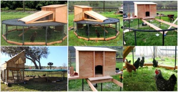 Trampoline Chicken Coop 1
