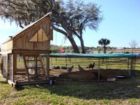 Trampoline Chicken Coop 2