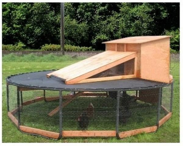 Trampoline Chicken Coop 3