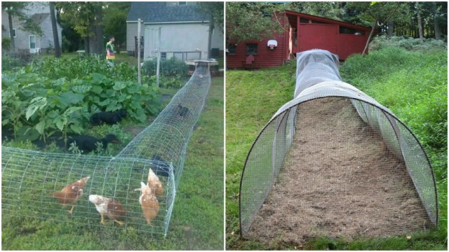 How To Make Diy Chicken Tunnels How To Instructions