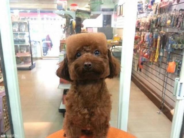 Dog Haircut 3
