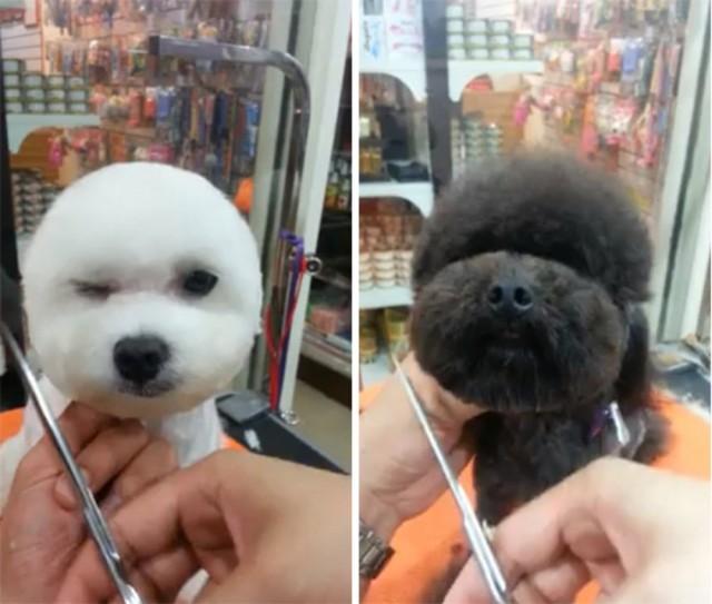 Dog Haircut 5