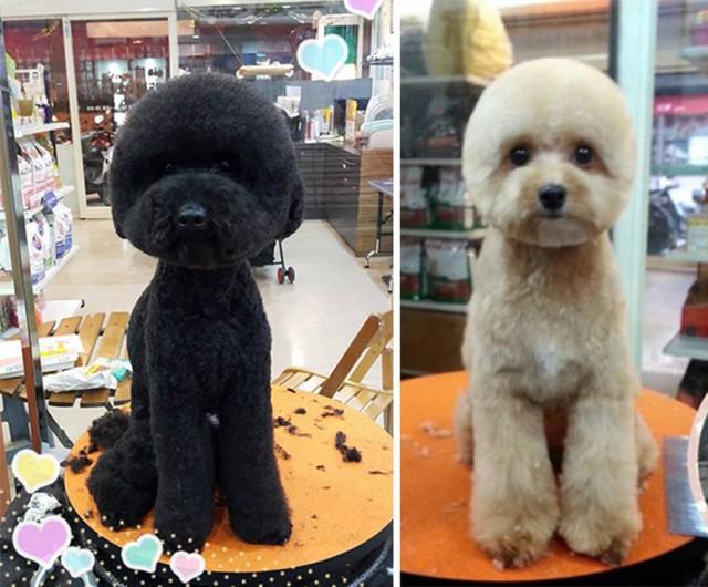 Dog Haircut 6