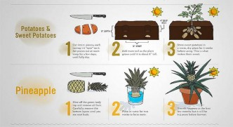 Food That Magically Regrows Itself From Kitchen Scraps 1