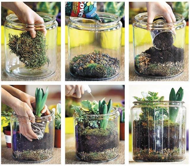 Jar-Plant-Terrarium