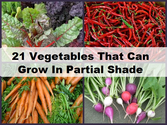 shade vegetable garden designerstyle