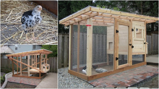 how to build a chicken coop step by step diy tutorial