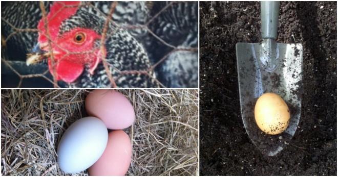 Plant Eggs
