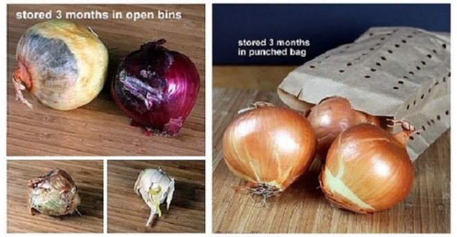 Store Garlic and Onions
