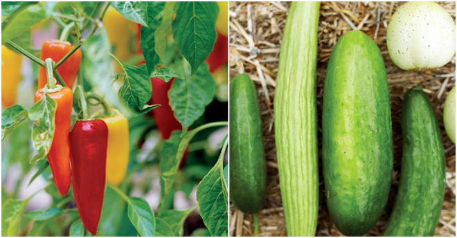 Best Fruits & Vegetables To Grow At Home 1