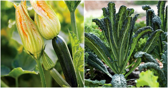 Best Fruits & Vegetables To Grow At Home 3