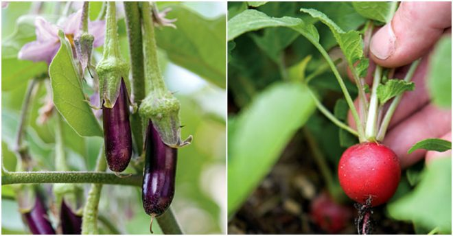 Best Fruits & Vegetables To Grow At Home