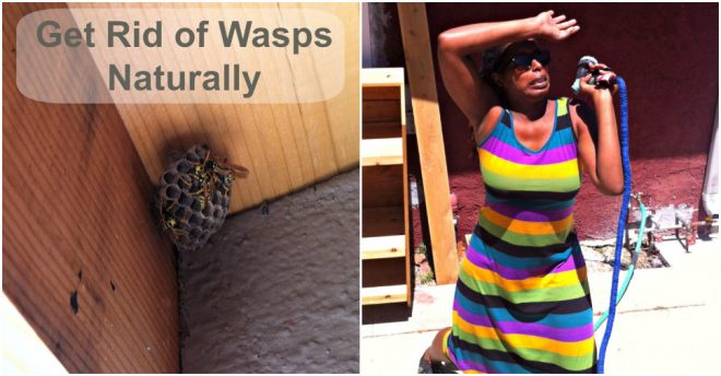 How To Get Rid Of Wasps Naturally