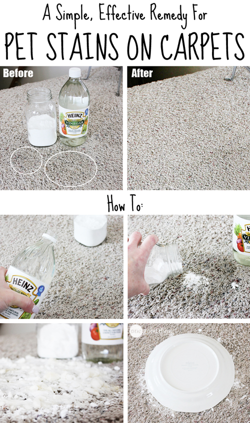 How to remove pet stains on carpets how to instructions - Remove carpet stains ...