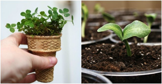 How To Start Seeds In Ice Cream Cones