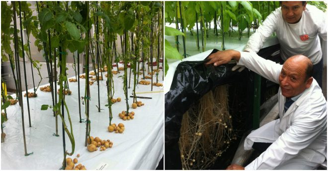 aeroponics-grow-potatoes-in-air