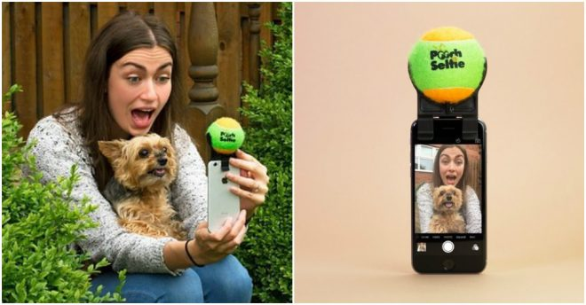 Pooch Selfie - How To Take Selfie With Your Dog Easily 1