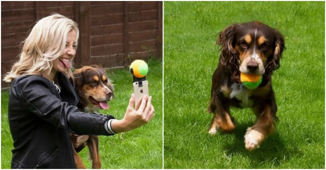 Pooch Selfie - How To Take Selfie With Your Dog Easily 2