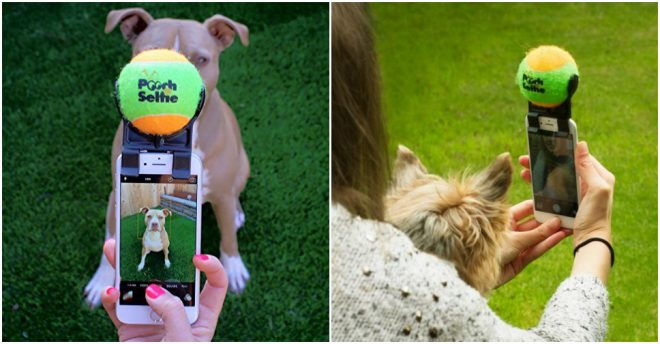 Pooch Selfie - How To Take Selfie With Your Dog Easily 4