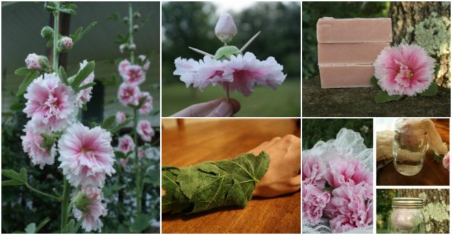 Uses For Hollyhocks
